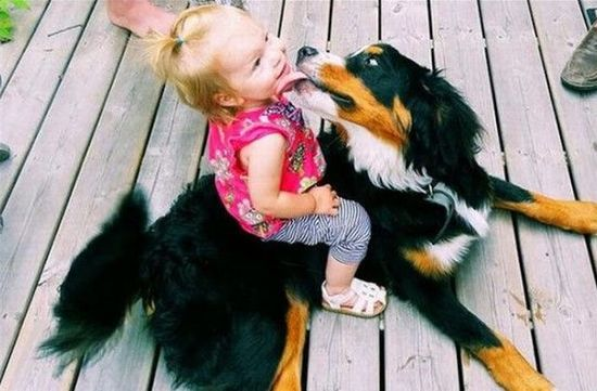 ~ Sweetness ~ Watch funny animal videos and pictures at yourpetclip.com