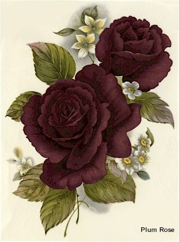 plum colored rose - Google Search