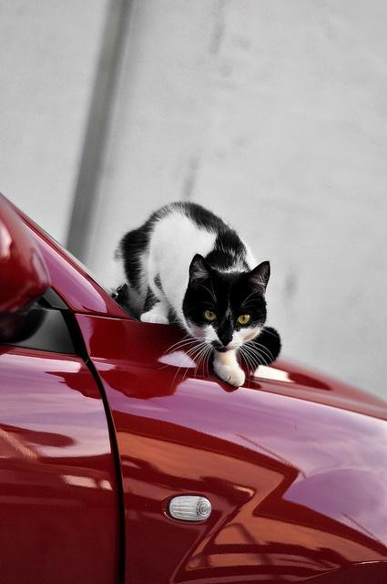 he loves cars