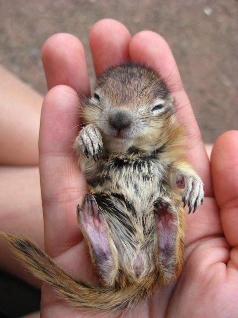 Tiny Baby