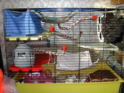 Do it yourself Rat hammock