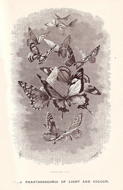 A phantasmagoria of light and colour (as interpreted in black and white). #vintage #Victorian #illustration #butterflies