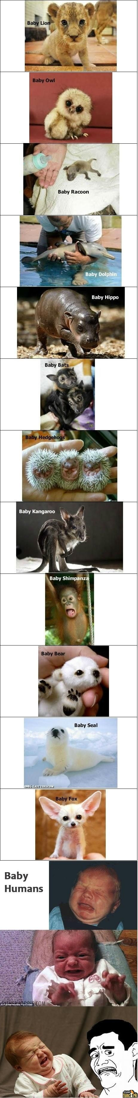 Awesome Baby Animals