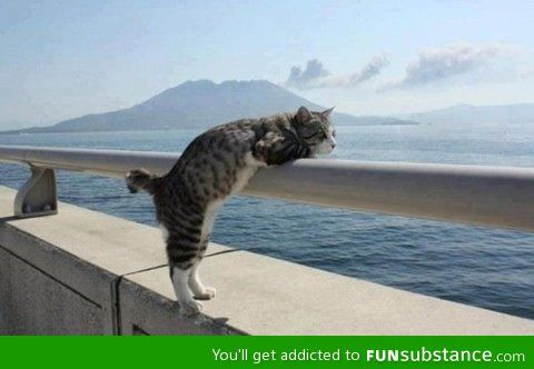 My cat really enjoys scenic views