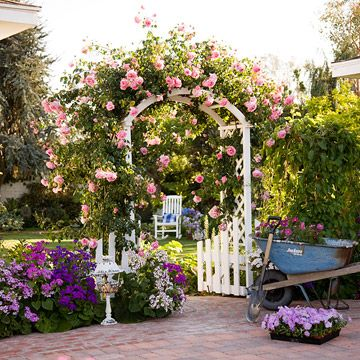 pink roses on a white trellis.