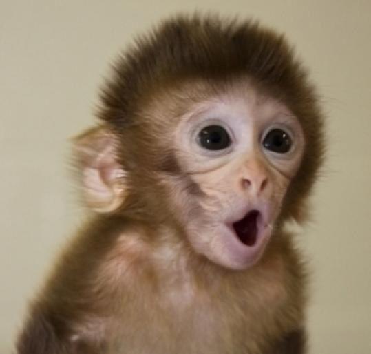 Baby monkey awww i wanttt