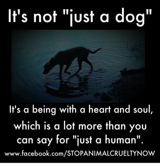 "It's not ""just a dog"""