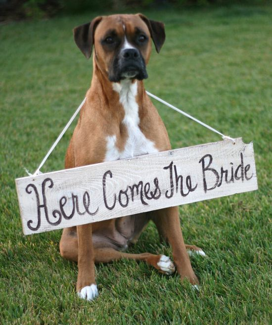 Awwww.... in my dreams.  I could just my dogs running down the aisle, jumping on everyone and then stopping to poop.