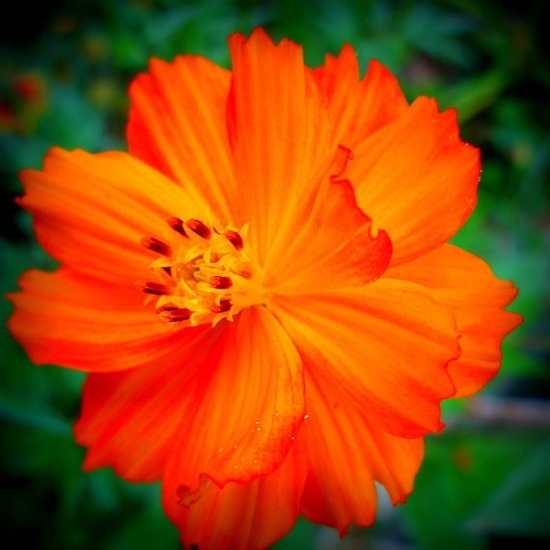 Orange Flower Photo  Nehi Orange  20x20 by FlourishPhotography#Repin By:Pinterest++ for iPad#