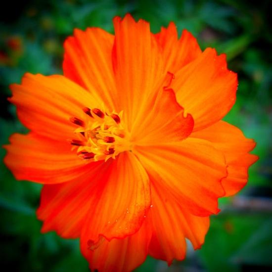 Orange Flower Photo  Nehi Orange  20x20 by FlourishPhotography#Repin By:Pinterest++ for iPad#