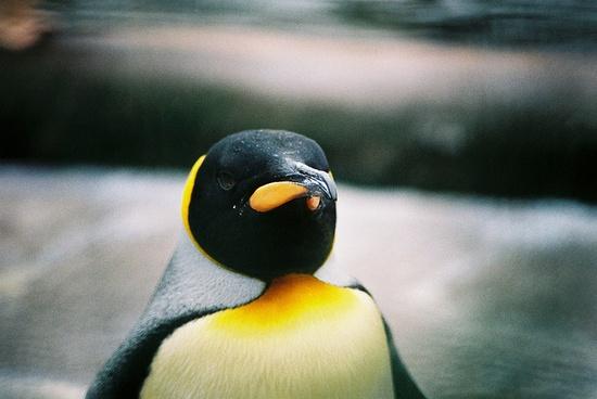 penguin #penguin #film