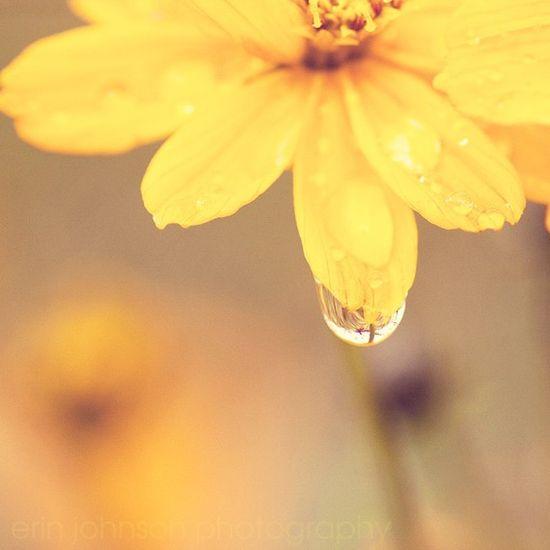 flower  elreannellis ETSY