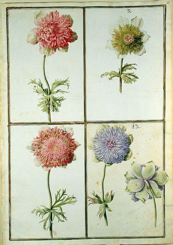 Karlsruhe tulips book