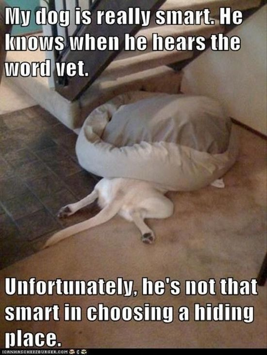 Funny Pictures – 48 Pics