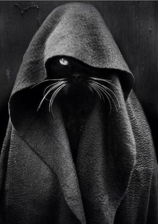 Obi Won Kitty Cat  #cat #humor #cats #funny =^..^= www.zazzle.com/...