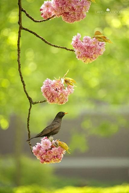 bird on a flower...