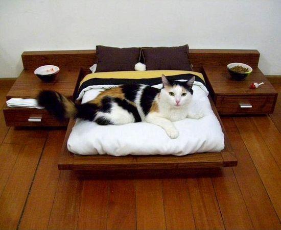 A platform bed for pets.