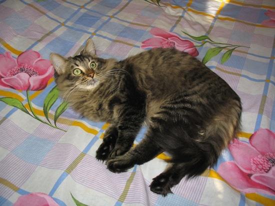 Funny Cat Photos - blog.esaba.com