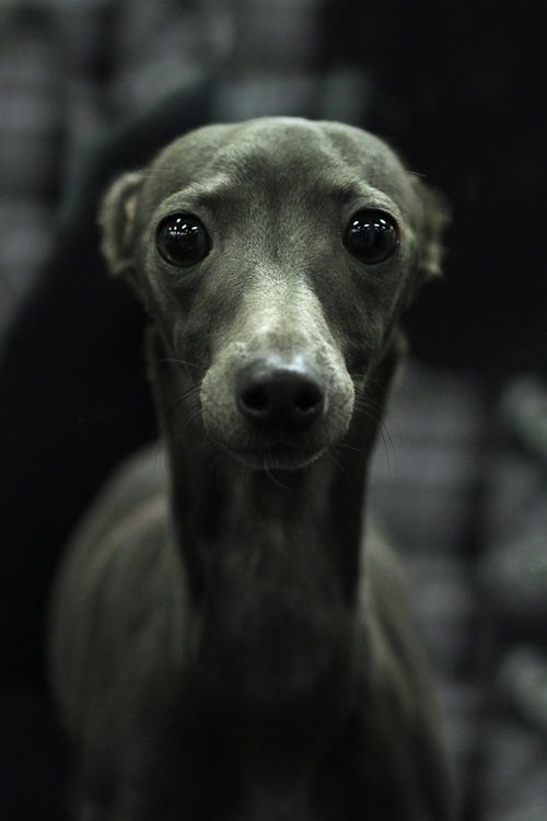 Jenna Marbles' silver unicorn Reminds me of Micha my first dog: whippet