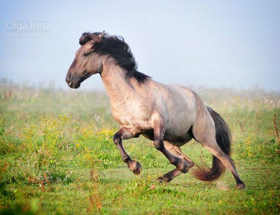 Whispering Plains (Horse & Human RP) Ba3d63743dbe02b8370191a07b8bcfcc