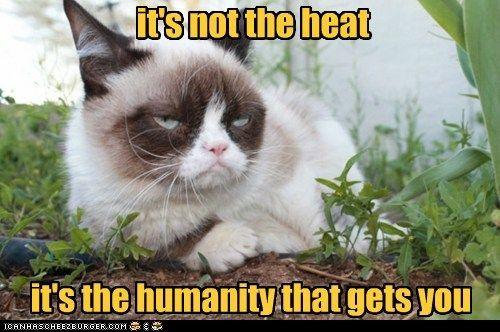 #GrumpyCat #meme For more Grumpy Cat stuff, gifts, and meme visit www.pinterest.com...