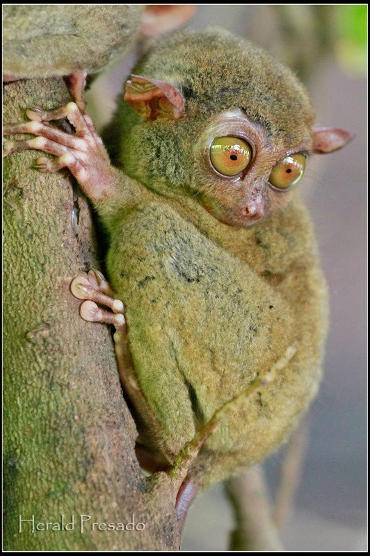 Looks like this monkey has moss growing on him.