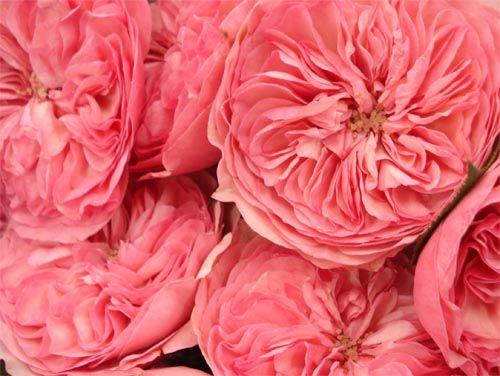 Flowers = love