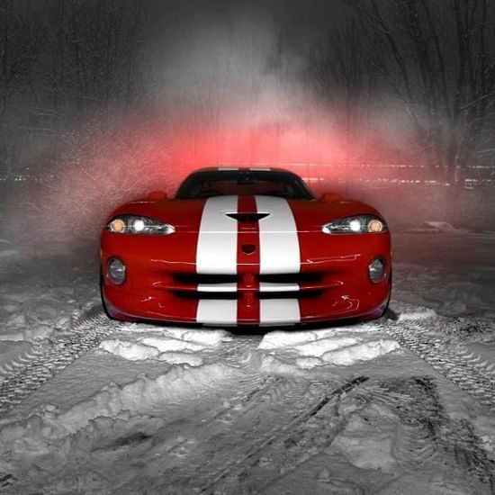 Viper in the snow