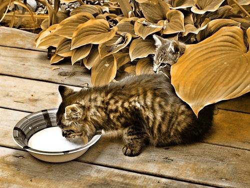 Gatos e outros bichos