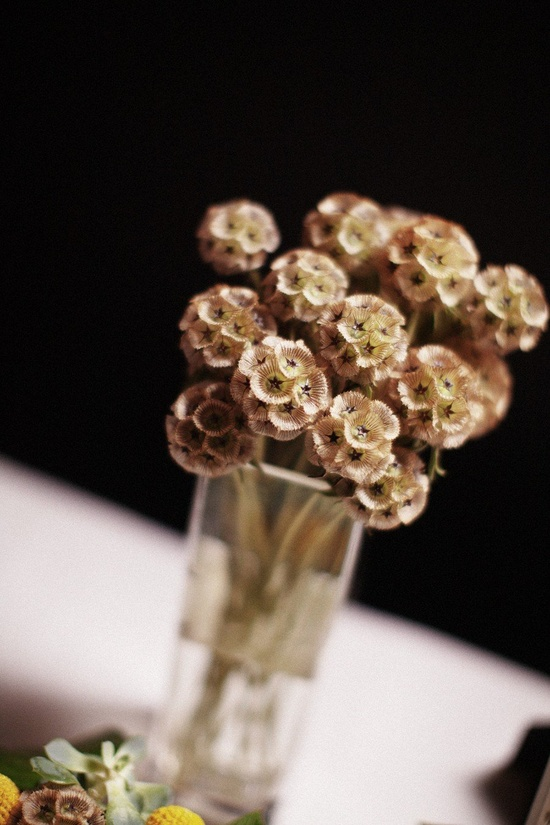 Scabiosa pods ;)  Photography by heatherelizabethp...