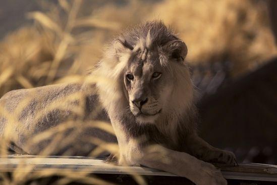 10 Amazing Wild Animal Sanctuaries You Should Support