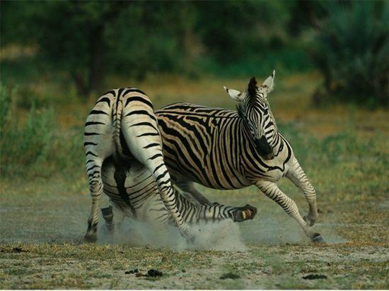 Wild Animals #wild #animals