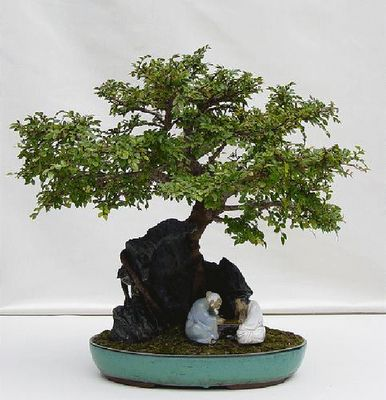 Bonsai Art - Bonsai Tray Cultivation, Ancient Art Of Growing Trees, Worlds Most Famous Bonsai Trees