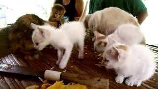 #Kittens Eating #Chips With #Baby #Monkey - #cats
