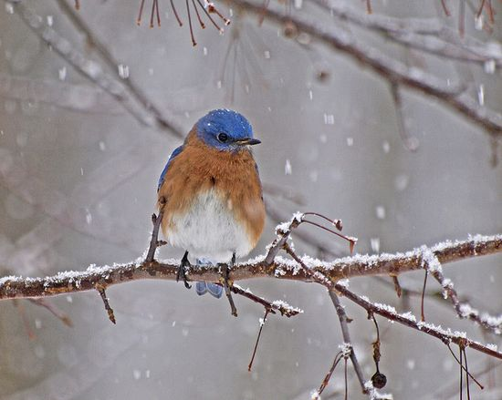Bird on limb