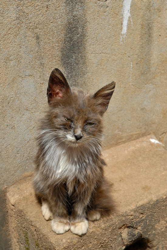 The Cat from Rabat, Morocco