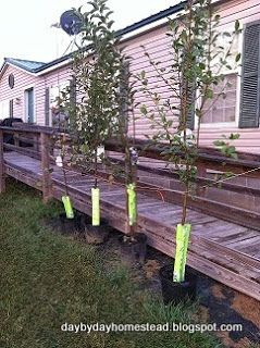 Day By Day Homestead: The Start of Our Fruit Orchard