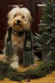 Christmas Dog ?