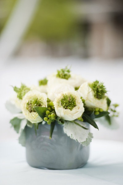 dusty miller with white