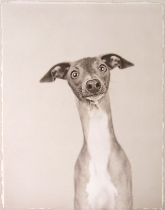 Ron van Dongen: #Cute pet #pet girl #pet boy