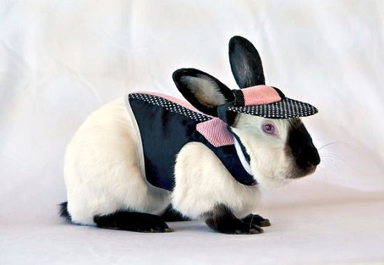 Trendy shirt harness for your pet boy rabbit by turvytopsy on