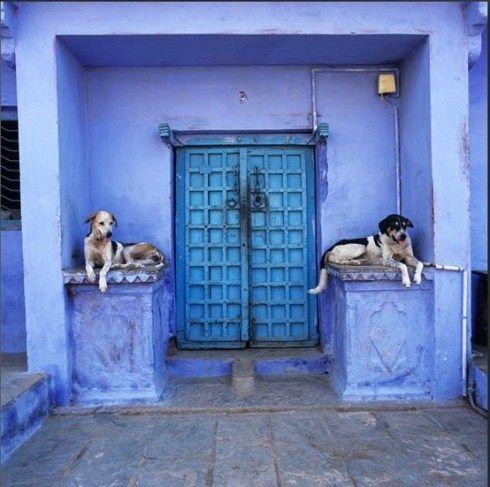 door and #Baby Dogs