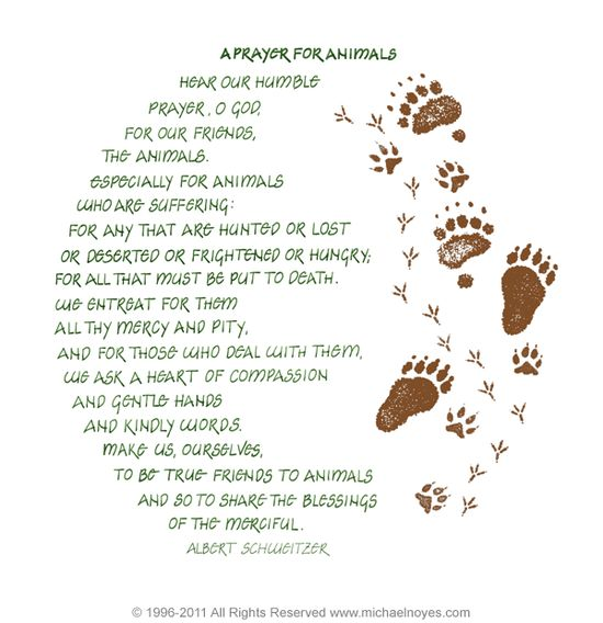 A Prayer for Animals