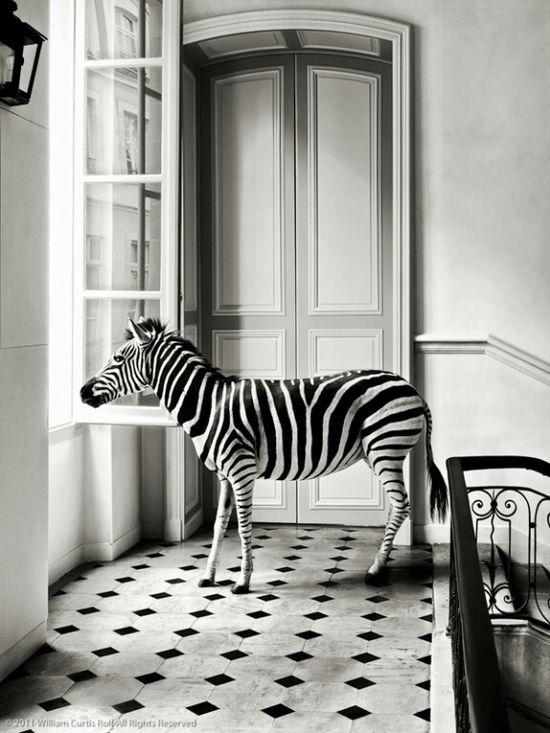 Le nouvel animal domestique; Deyrolle, Paris. Noir et blanc