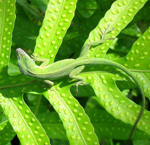 .Lizard on fern.