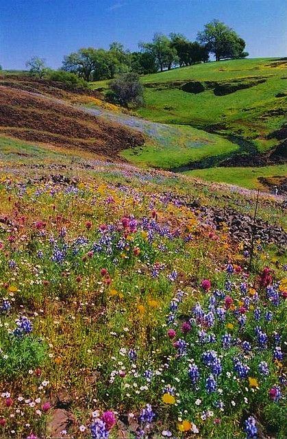 Table Mountain wildflowers