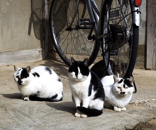 By Masakazu Ikeguchi  (??? the tuxedo kitties)