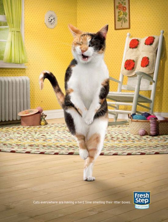 Fresh Step - Cat litter. bit.ly/yq9h7a. For more daily dosage of insanely funny ads, follow us on Catchy Ad of the Day board, twitter @saleschase or facebook.com/saleschase. #FunnyAds #InsanelyFunnyAds