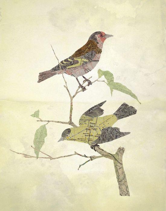 #color #bird