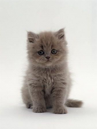 Baby Kitty!!